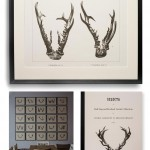 RED STAG AND ROEBUCK ANTLER PRINTS