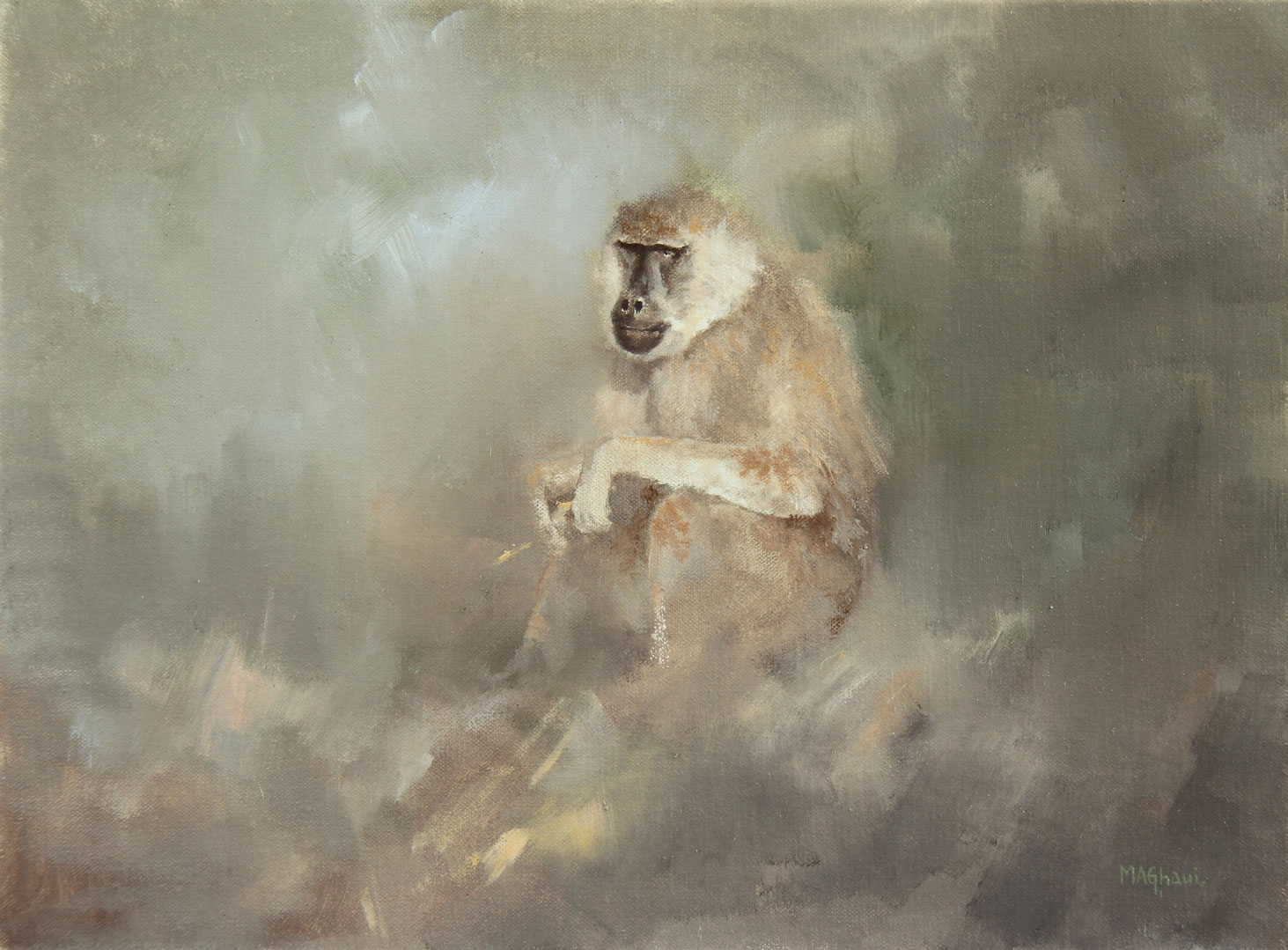 Baboon---'--Baboon-Study-'---Oil-on-linen-canvas---Size-12-inches-x-16-inches---May-'12