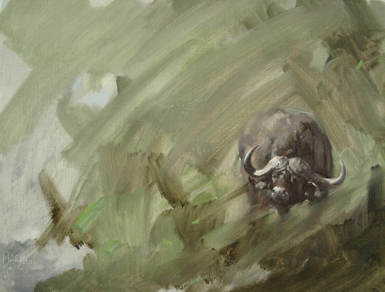 Buffalo-Sketch-M-Ghaui