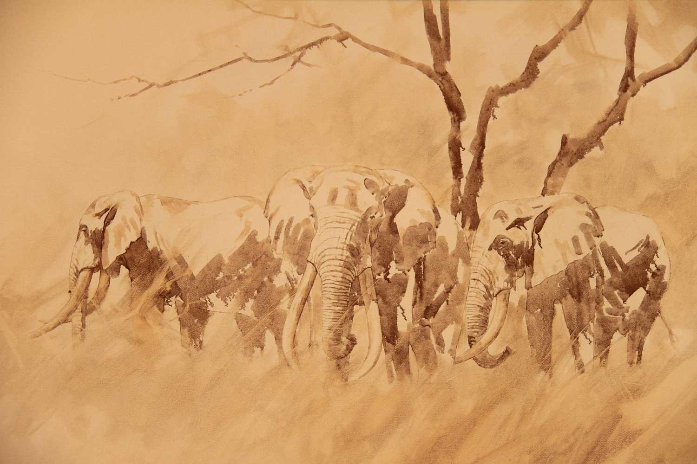 Bull-Elephants-M-Ghaui