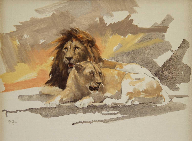 Lion-Lioness-M-Ghaui