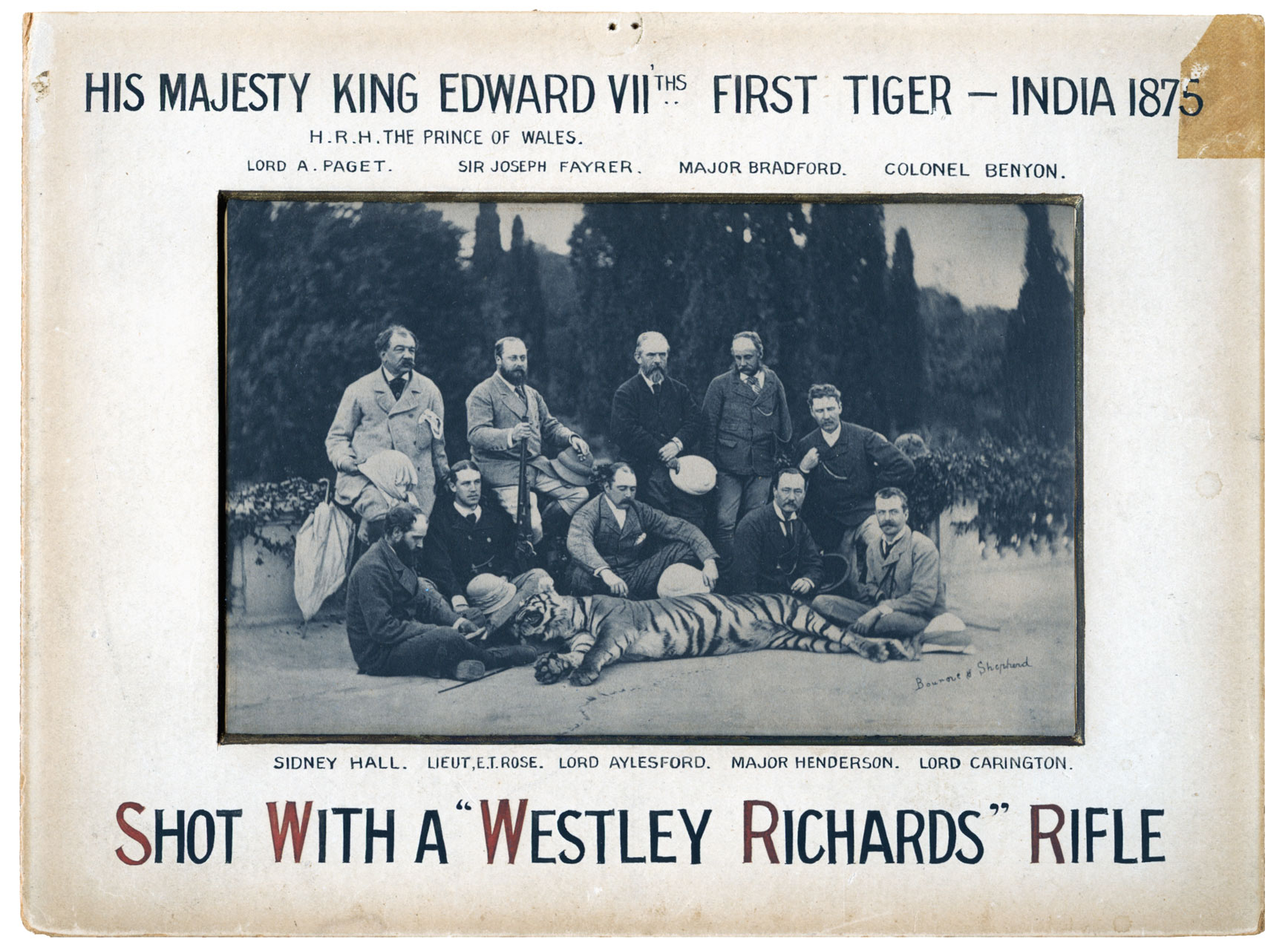 King-Edward-1st-Tiger