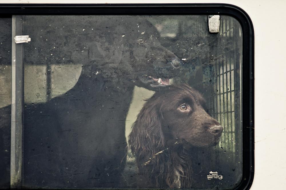 ByBrett Dogs on Shoot