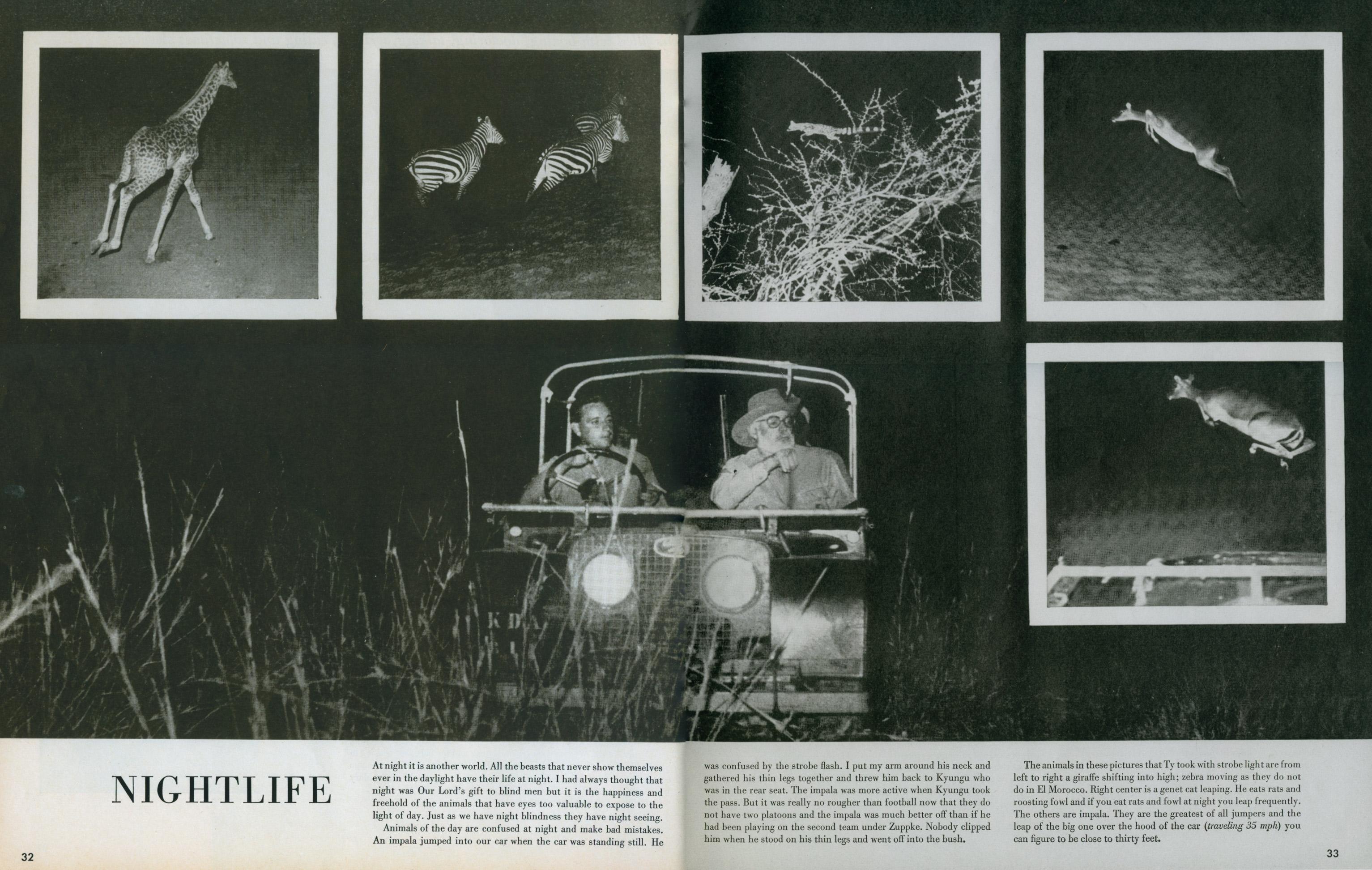 Look Magazine- Safari 14
