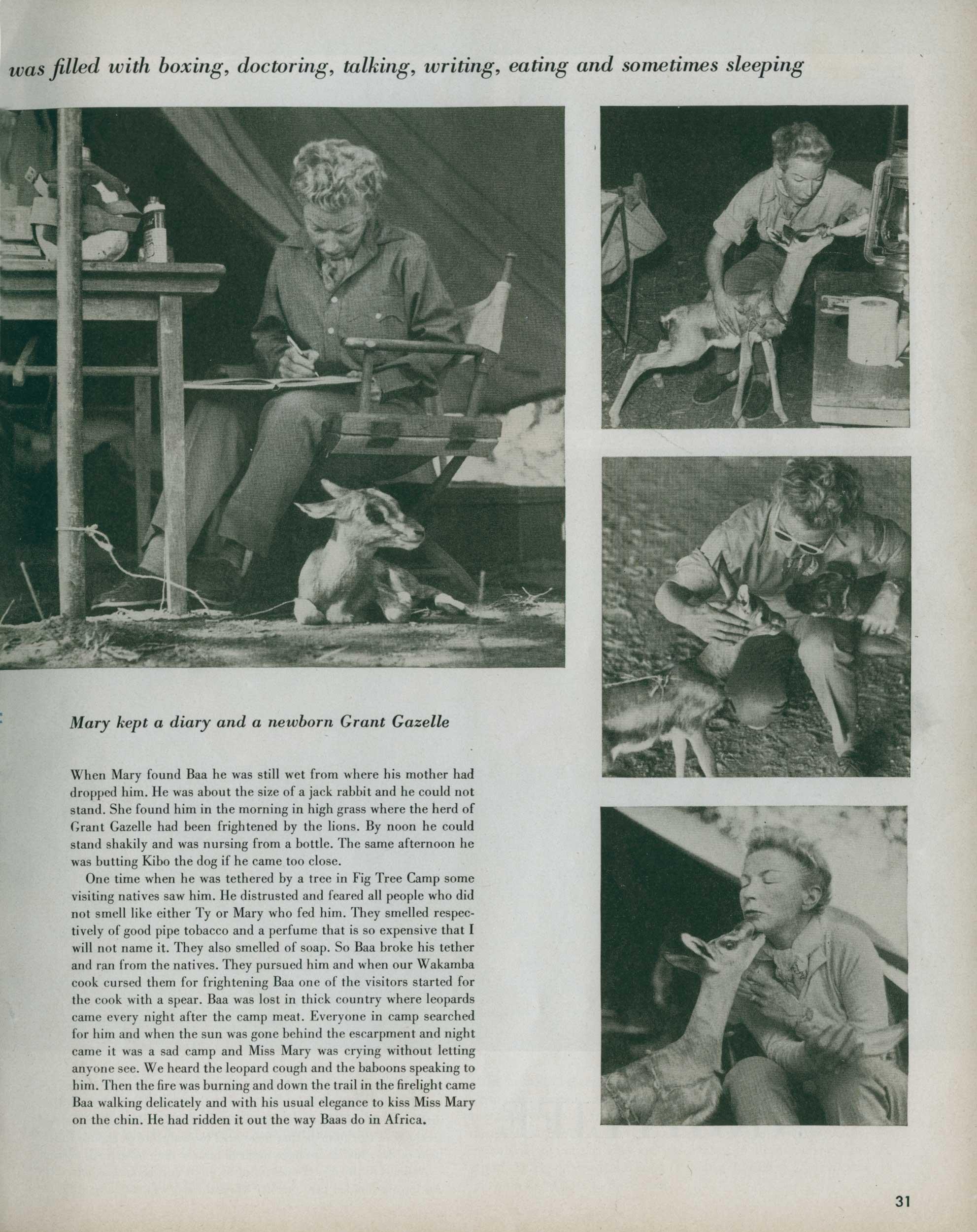 Look Magazine- Safari 13