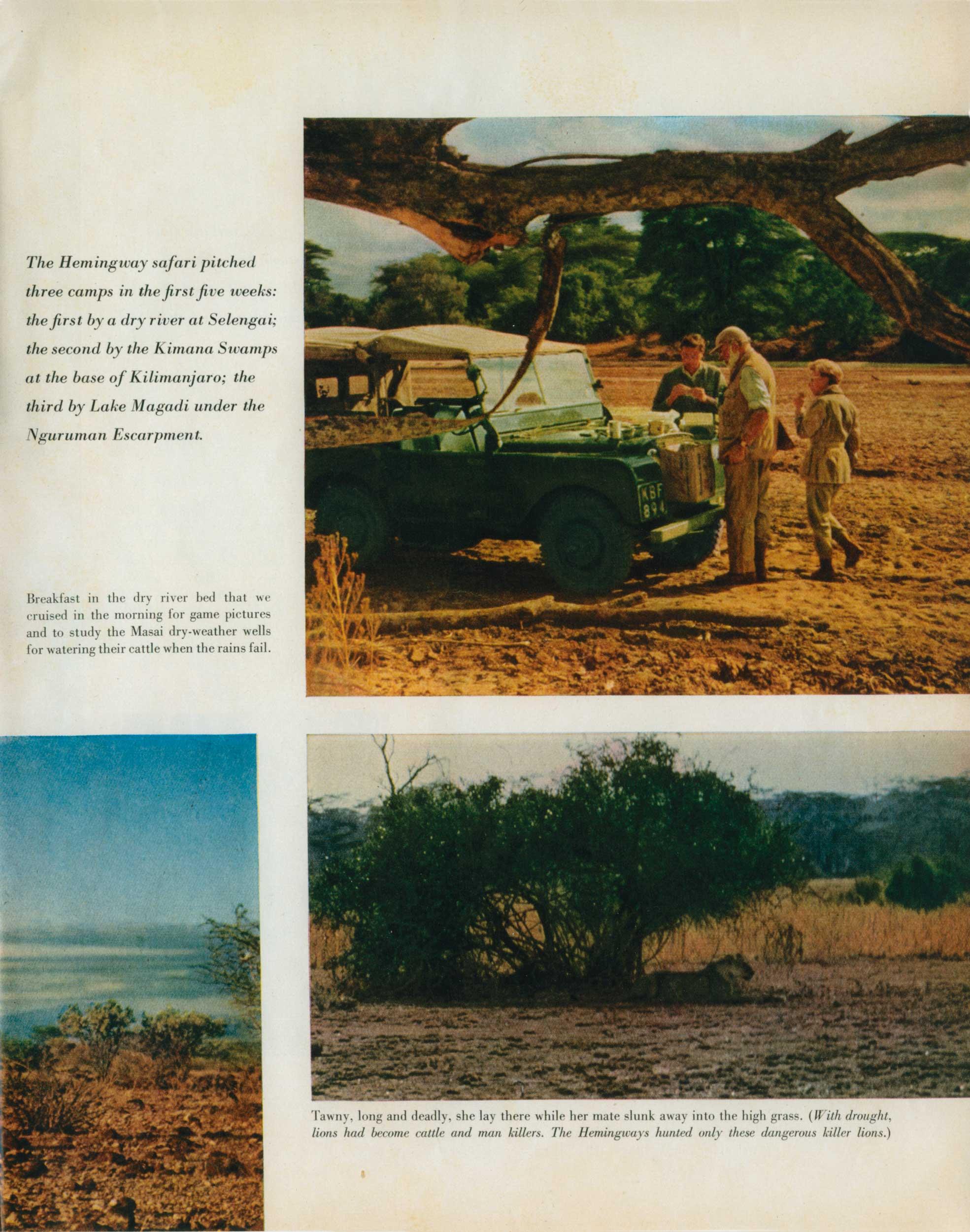 Look Mag. Safari 5