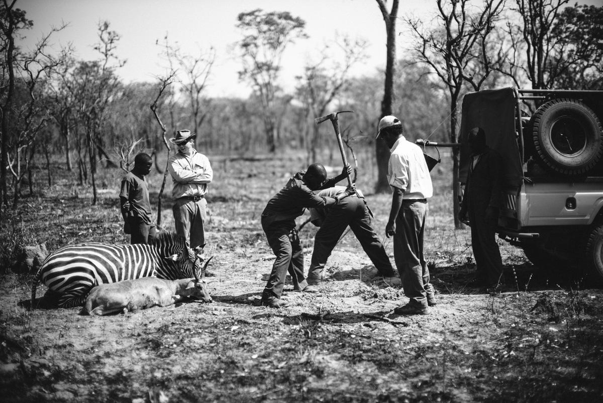 Westley Richards, Safari,