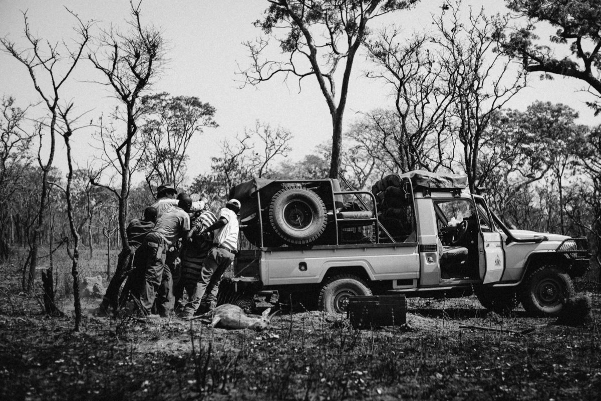 Safari, Westley Richards, Hunting