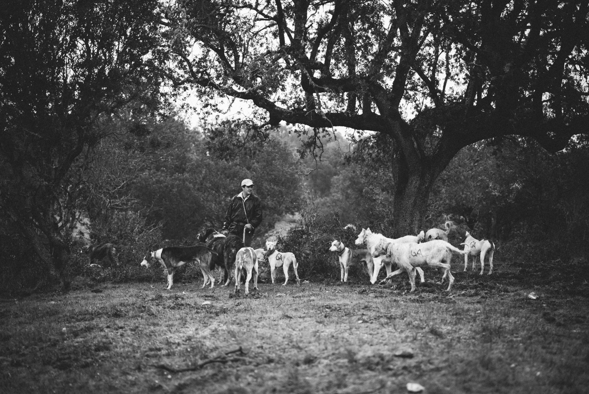 Monteria hounds taking a rest.