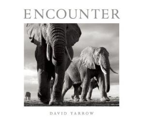 Encounter David Yarrow