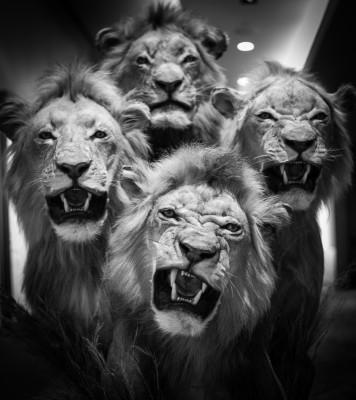 Dallas Safari Club Convention 2016
