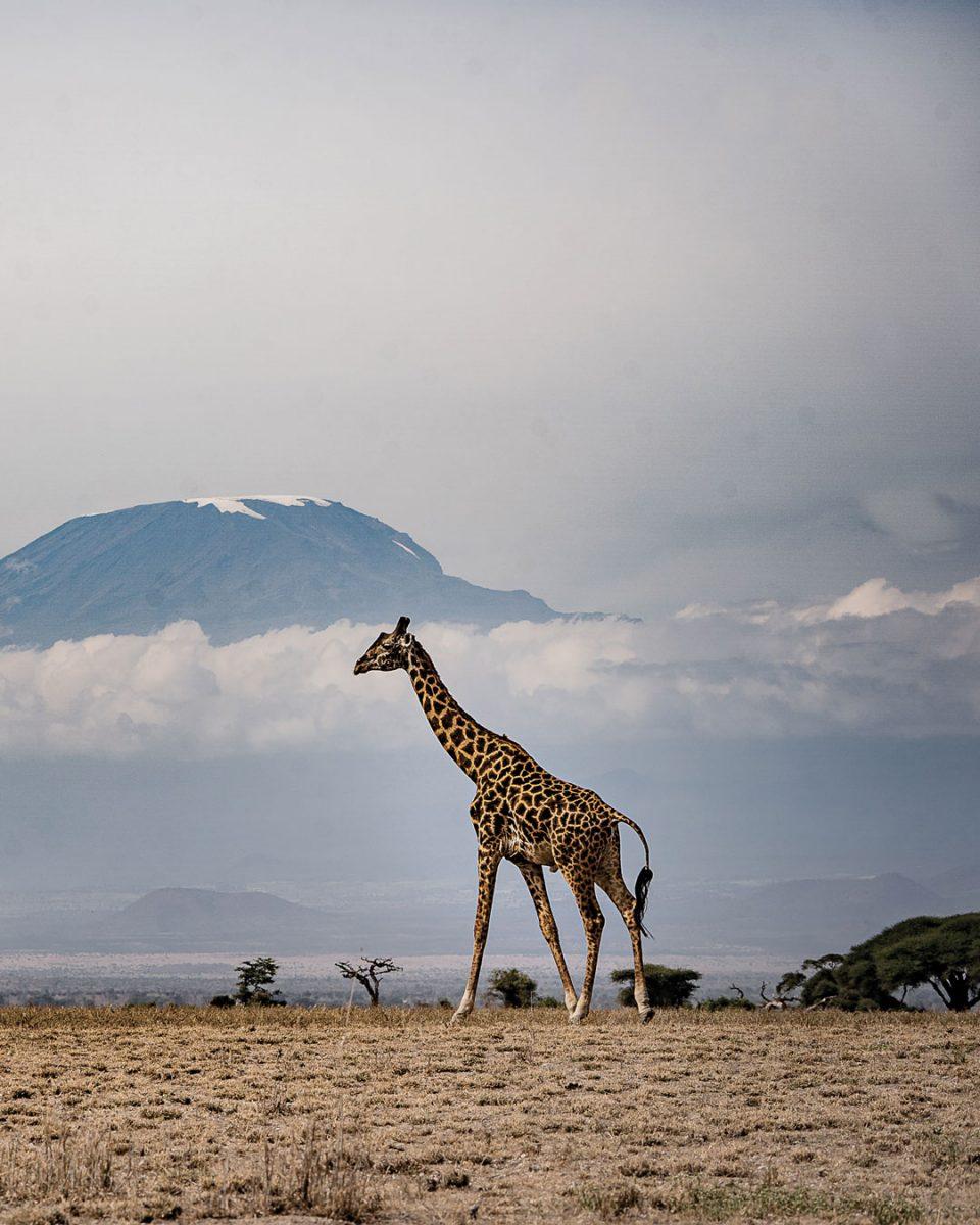 An Early Memory of Safari