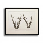Limited Edition Set of 30 Red Stag and Roebuck Antler Prints